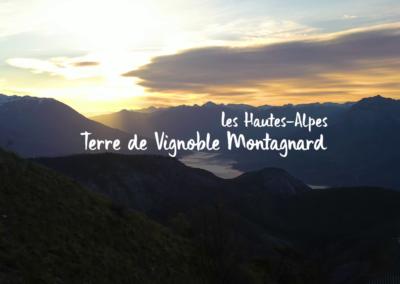 Les vins des Hautes-Alpes